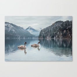 Couple of swans, Alpsee lake Canvas Print