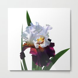 Iris 'Connection' Metal Print