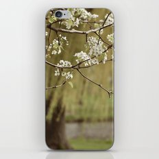 Spring-scape iPhone & iPod Skin