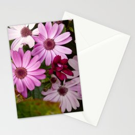 Pink African daisies Stationery Cards