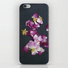 Wild Rose Petals iPhone & iPod Skin