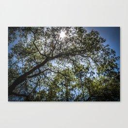 Upwards Canvas Print