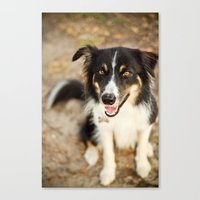 border collie Canvas Prints featuring Border Collie by Paw Prints By Jamie