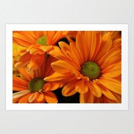 Orange Daisies  Art Print