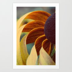 Black eyed susan 04 Art Print