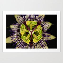 Passiflora caerulea Art Print