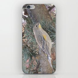 Audubon's Warbler on a Spruce Branch iPhone Skin