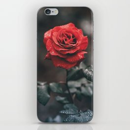 ROSE - WET - DEW - WATER iPhone Skin