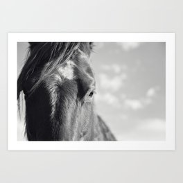 Close Up Horse Picture in Black and White Art Print