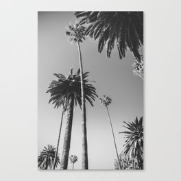 Palm Trees (Black and White) Canvas Print