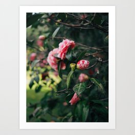 Pink Floral I Art Print