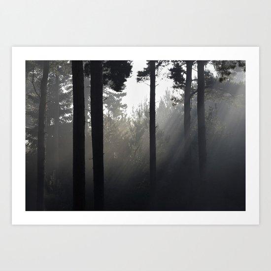 sun light through forest mist Art Print