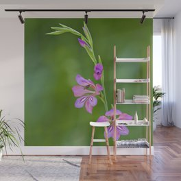 Beauty in nature, wildflower Gladiolus illyricus Wall Mural