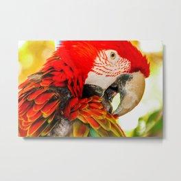 Scarlet Macaw Parrot Metal Print