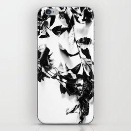 Bay leaves 4 iPhone Skin