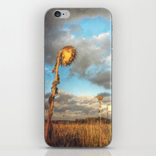 Field of lost Souls - Withered Sunflowers iPhone & iPod Skin