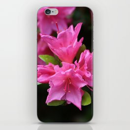 Pink Azelaea Spring Flowers Pretty Flowers Blossoms Nature Flora iPhone Skin