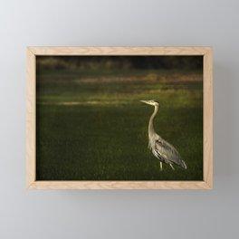 Great Blue Heron against a Dark Background Framed Mini Art Print