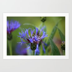 Touch of Purple Art Print