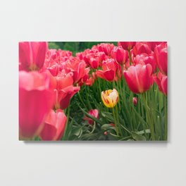 Yellow in the Red Metal Print