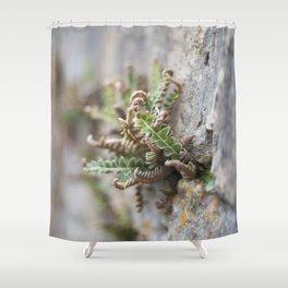 Fern Shower Curtain