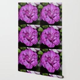 Lilac carnation Wallpaper
