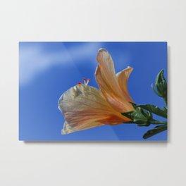 Yellow Hibiscus In The Sun Metal Print