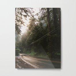 Luminous Road through the Redwoods Metal Print