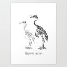 Pezophaps solitaria Art Print