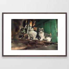 Family of Cats Framed Art Print