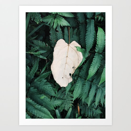 Nature Walk 001 - White Leaf Art Print