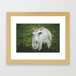 Funny Goat Framed Art Print