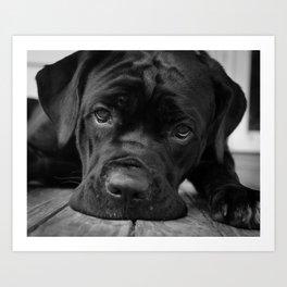 Gurdy on Porch Animal / Dog Black & White Photograph Art Print