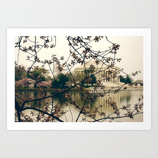 Cherry Blossom's  Art Print