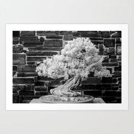Bonsai Juniper Thrives in its Tray in a Japanese Garden Art Print