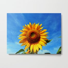 Stunning Sunflower Metal Print
