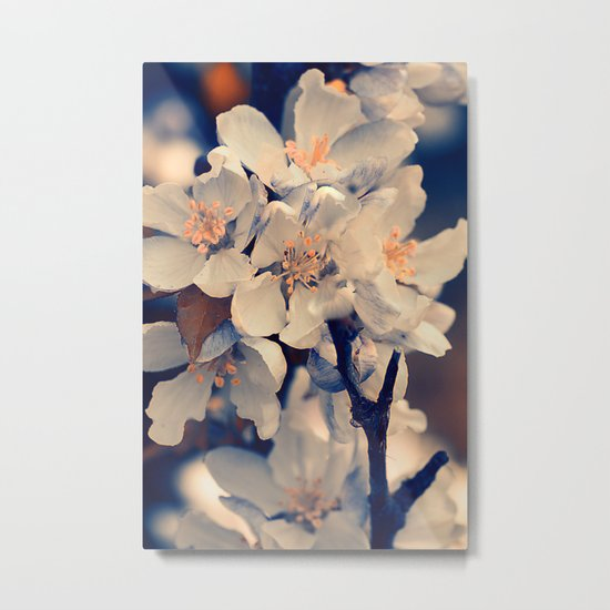 Almond bloom(2) Metal Print