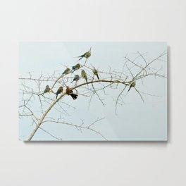 Birds of a Feather Flock Together Metal Print