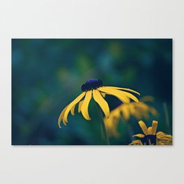 Black Eyed Susan on a Misty Day Canvas Print