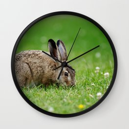 Lepus europaeus young hare Wall Clock