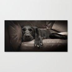 Black Labrador Asleep Canvas Print