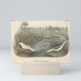 Vintage Print - Birds of America (1840) - Spotted Sandpiper Mini Art Print