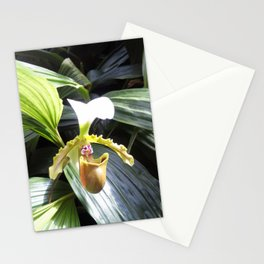 Lady Slipper Orchid Stationery Cards
