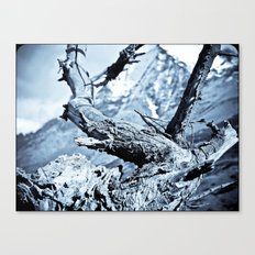 Nature dry. Canvas Print