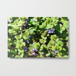 Ground Ivy 06 Metal Print