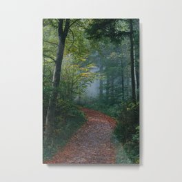 The Forest Path (Color) Metal Print