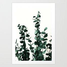 Eucalyptus Dark Green Art Print