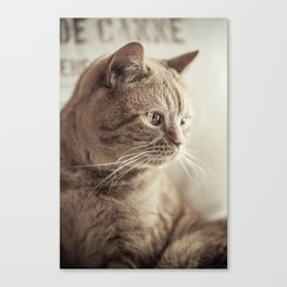 my cat Canvas Print