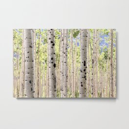 Dreamy Aspen Grove Metal Print