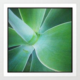 Dana Point Succulent 1 Art Print